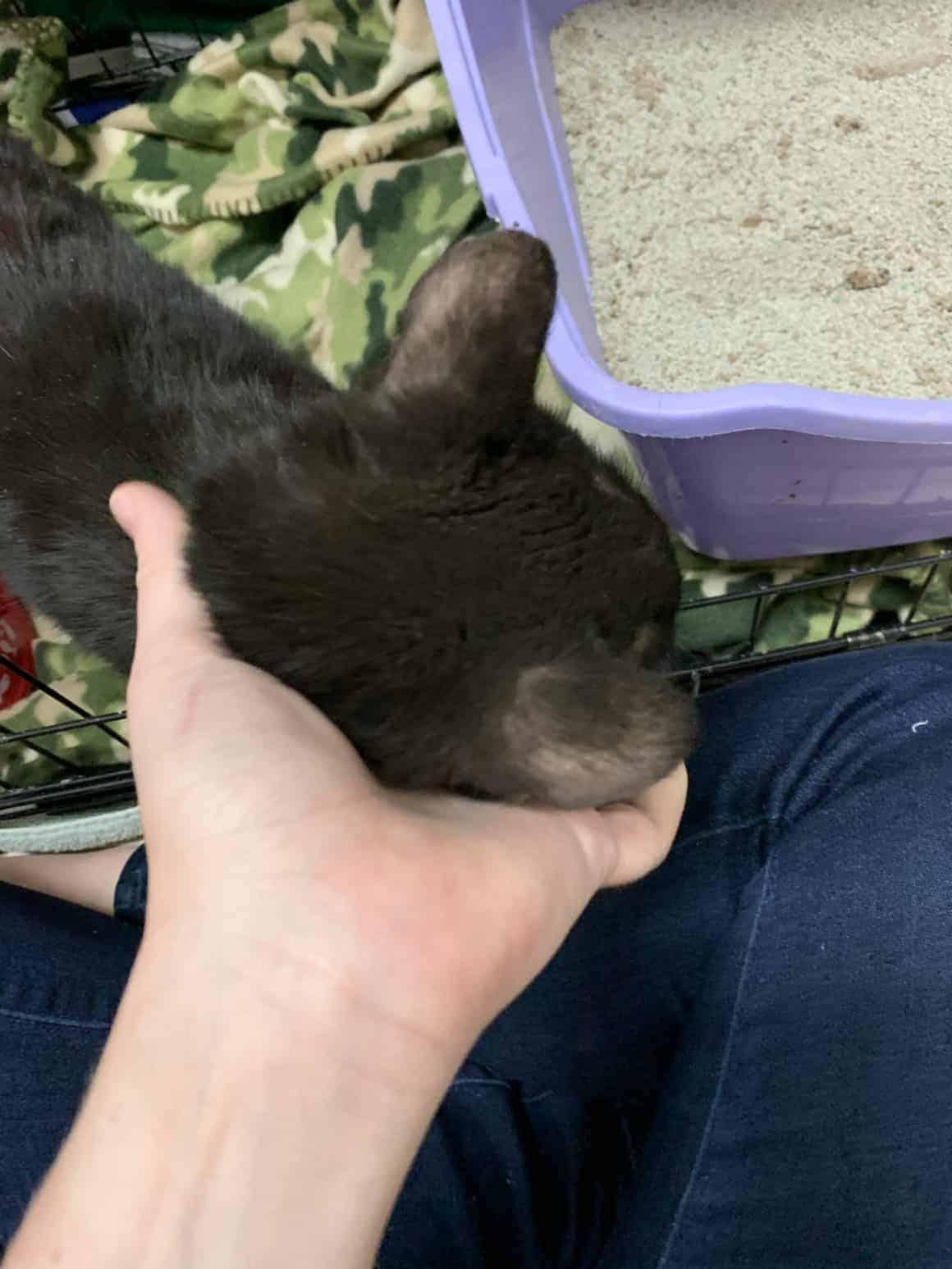 Peralta – Adopted