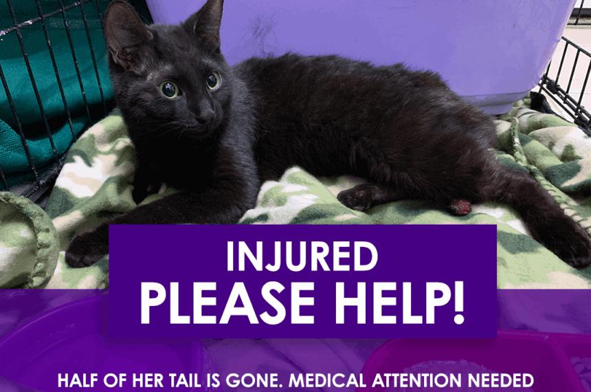 Peralta: HELP INJURED CAT