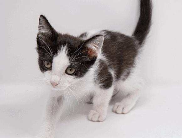 Skim – Adopted
