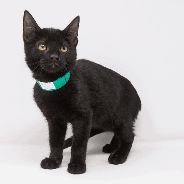 T'Challa – Adopted