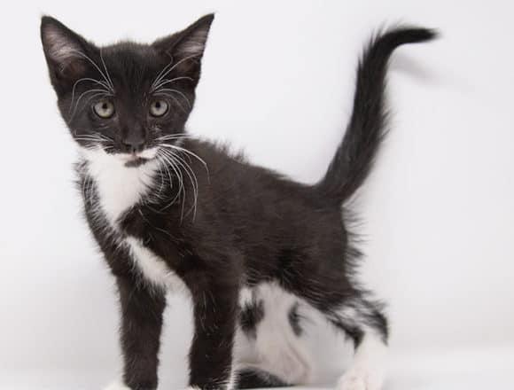Tamara – Adopted
