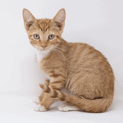 Hera – Adopted