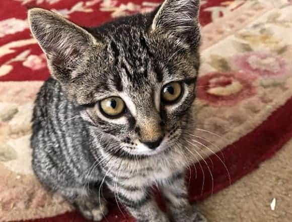 Clarissa – Adopted