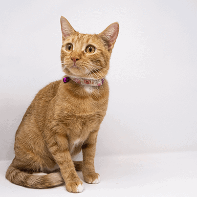 Seneca – Adopted