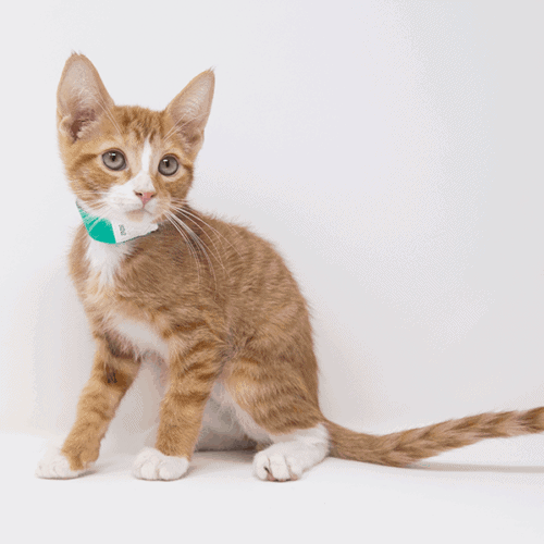 Ajax-Adopted