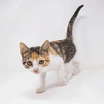 Boomerang – Adopted