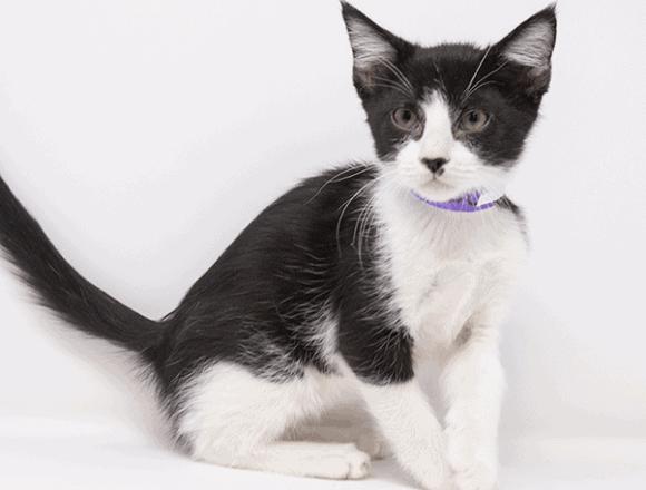 Calypso – Adopted