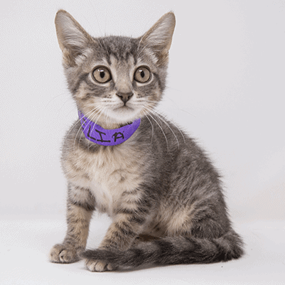 Emelia – Adopted