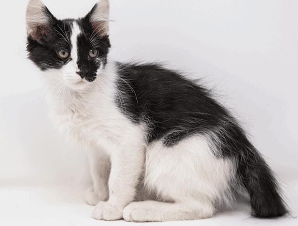 Cameron – Adopted