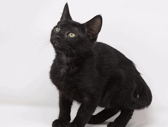 Brambleberry – Adopted
