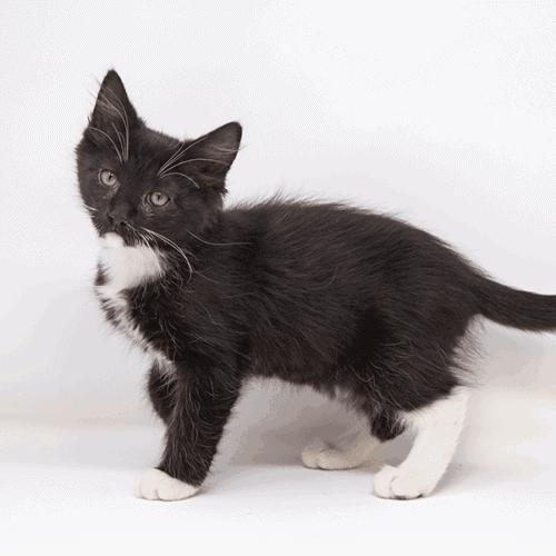 Josh – Adopted