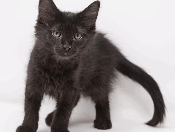 Trevor – Adopted