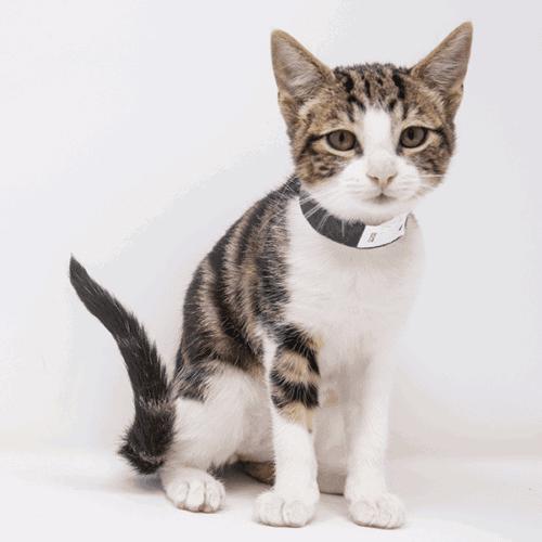 Jawa – Adopted