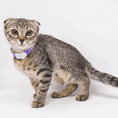 Nessa – Adopted