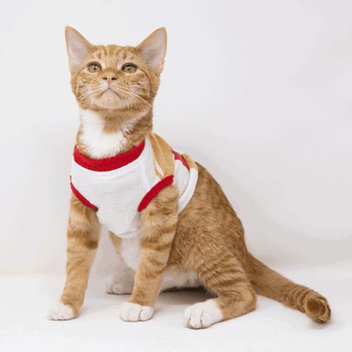 Super Mario – Adopted