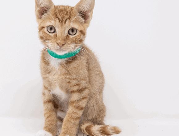 Triton – Adopted