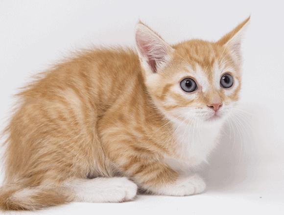 Jonesy – Adopted