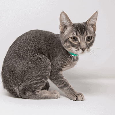 Milky Way – Adopted