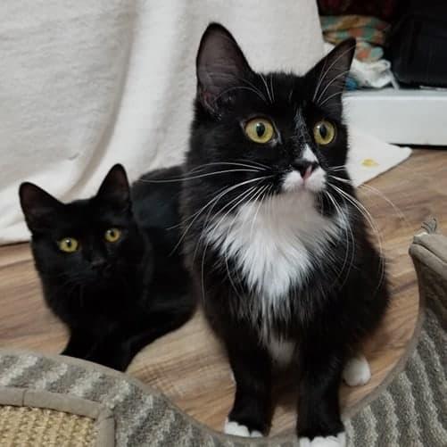 Clawdius – Adopted