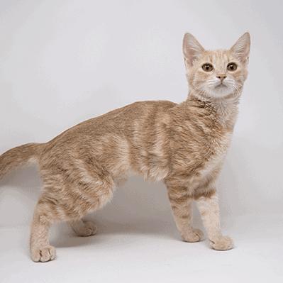Cinnabon – Adopted