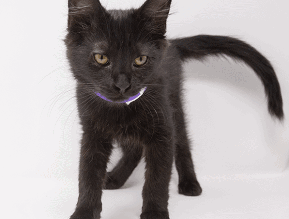 Dasha – Adopted