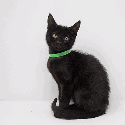 Guidry – Adopted