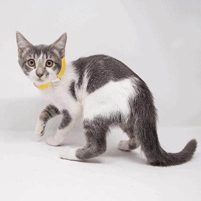 Gumdrop – Adopted