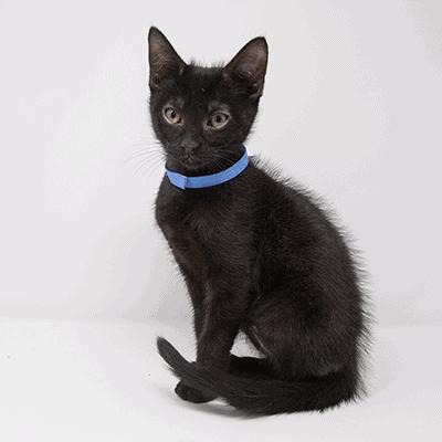 Munson – Adopted