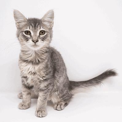 Iggy – Adopted