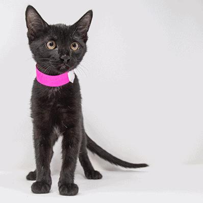 Ambrosia – Adopted