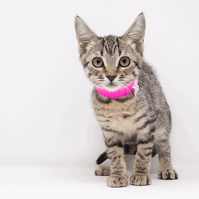 Ariane – Adopted
