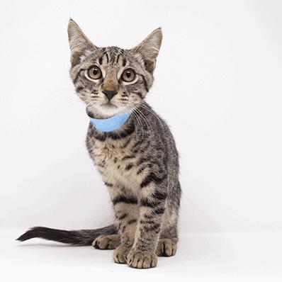 Braeburn – Adopted