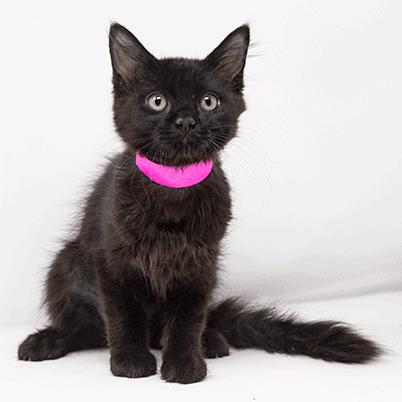 Ebene – Adopted