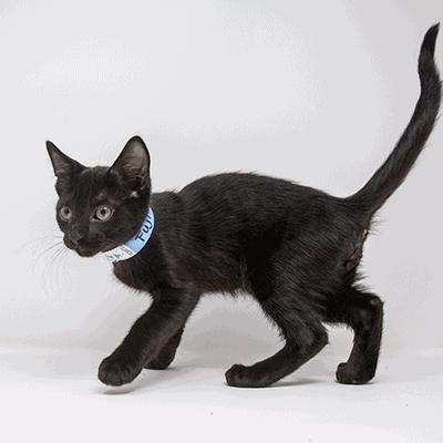 Fuji – Adopted