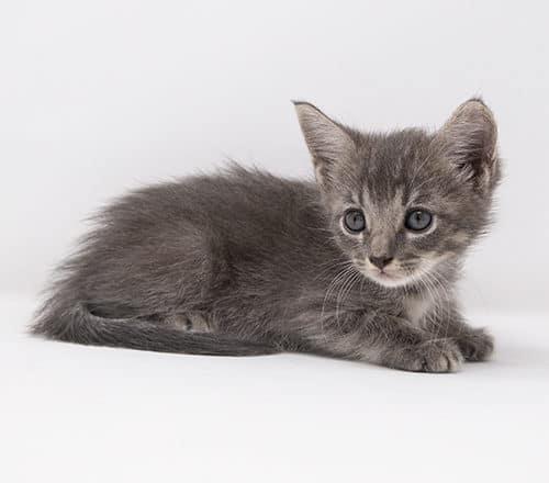 Skye – Adopted