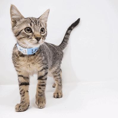 Lodi – Adopted