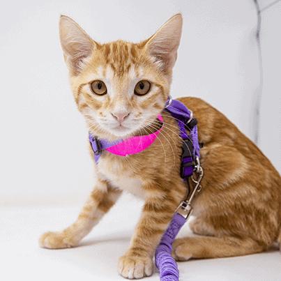 Suzie – Adopted