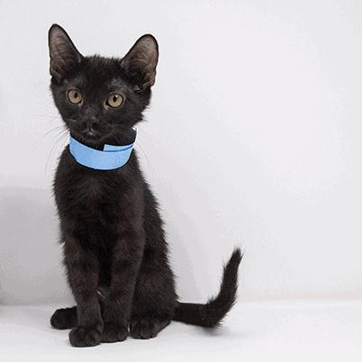 Pyro – Adopted