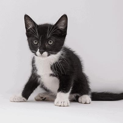 Skip – Adopted