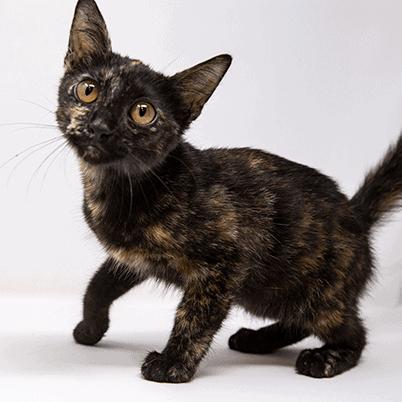 Tamarind – Adopted