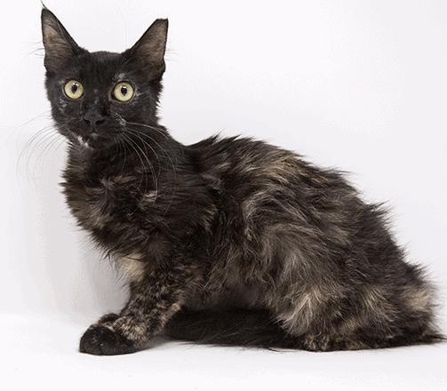 Tumeric – Adopted