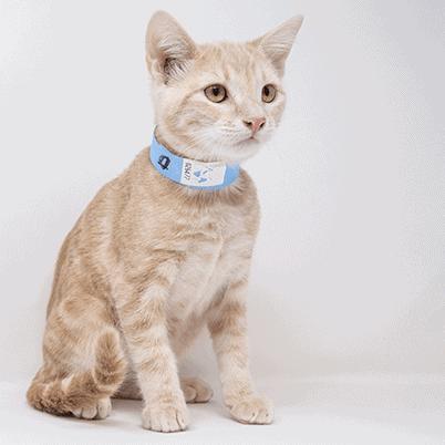 Kye – Adopted