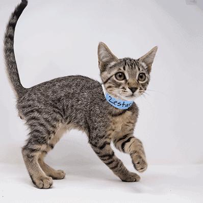 Zestar – Adopted