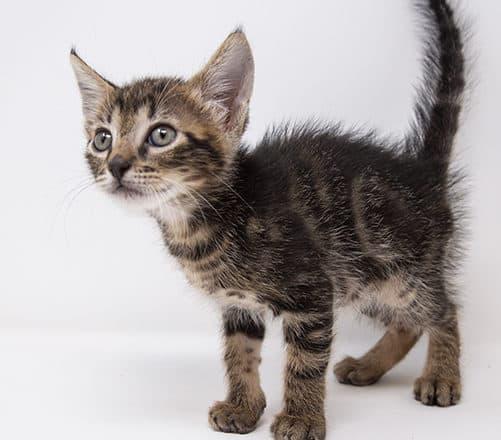 Nabisco – Adopted