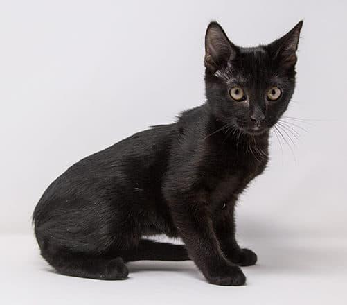 Sabina – Adopted