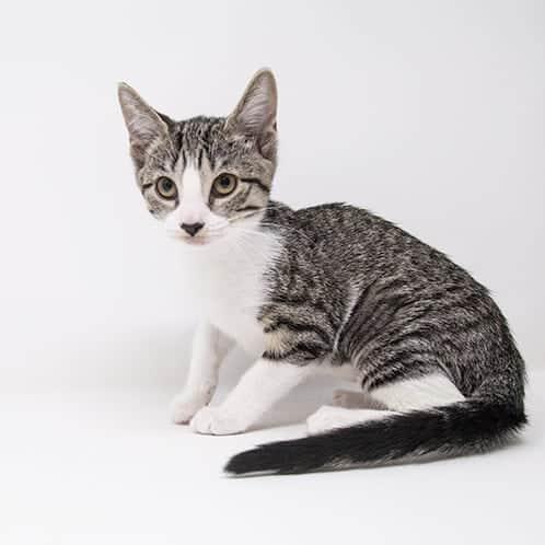 Samantha – Adopted