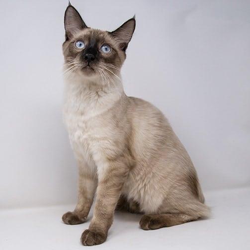 Wyatt – Adopted