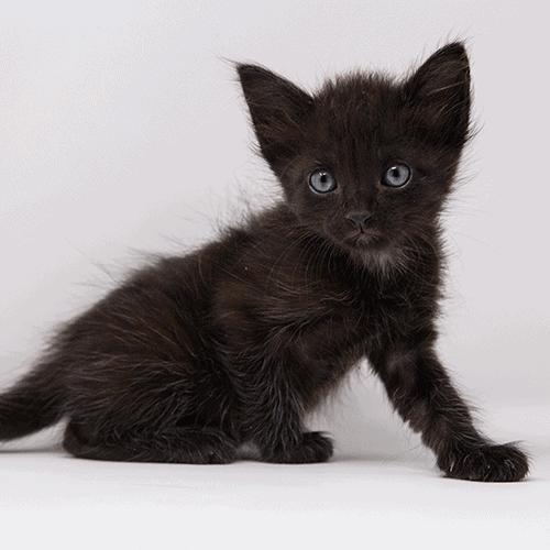 Stellaluna – Adopted