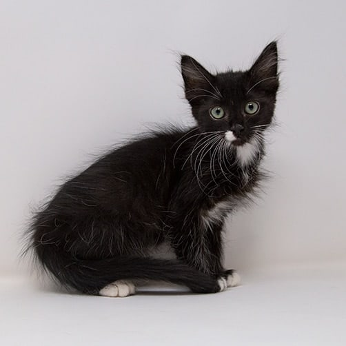 Tapatio – Adopted