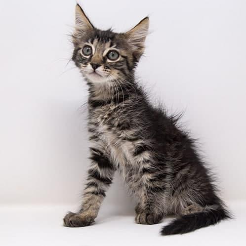 Tobasco – Adopted